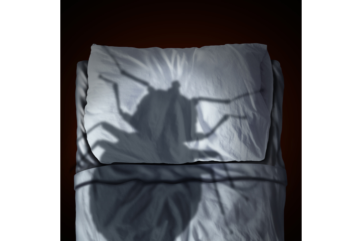 Bed Bug Extermination Shadow on Mattress
