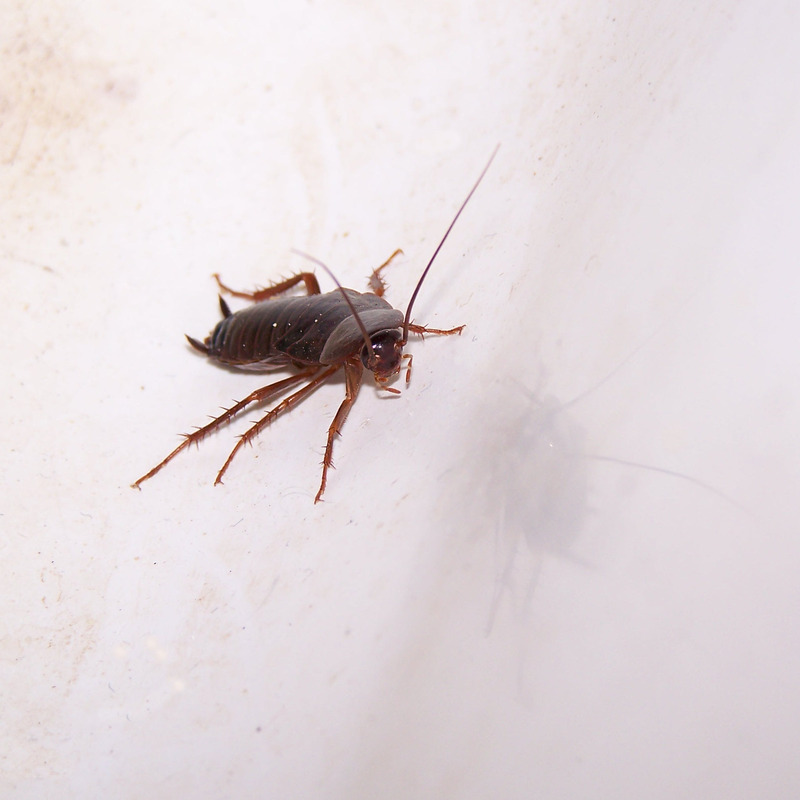 a single cockroach