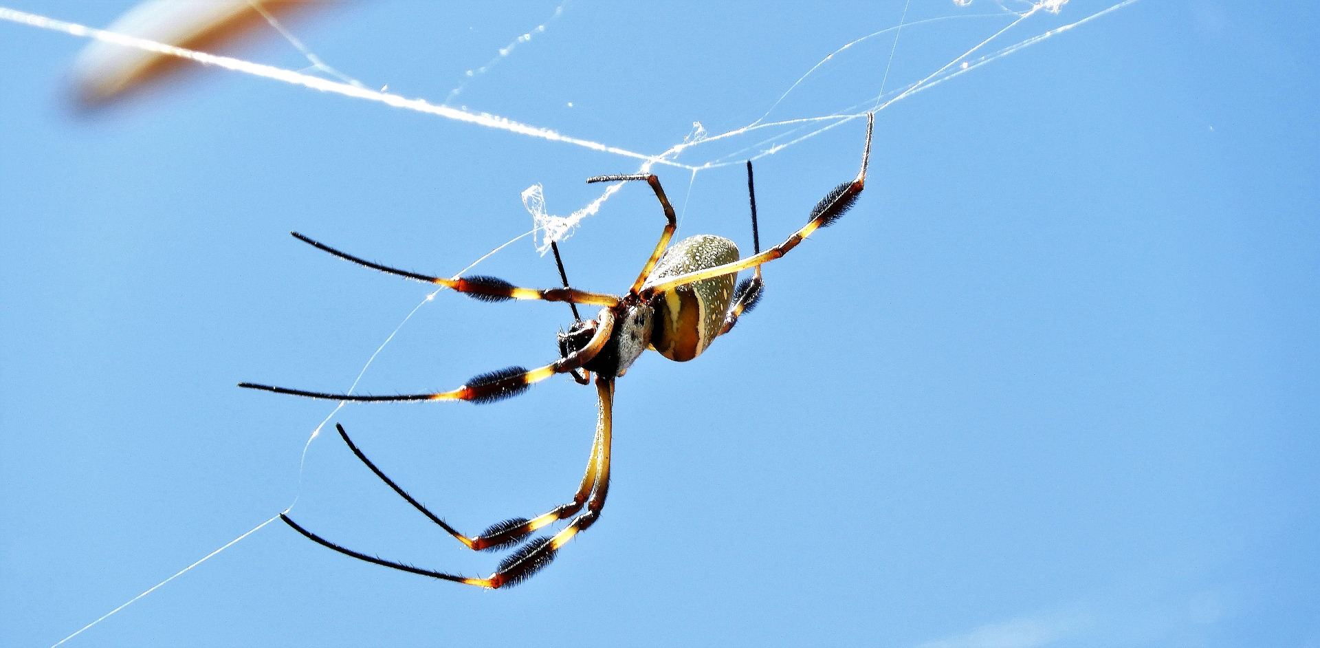 Massachusetts Spiders by Boz Pest Control