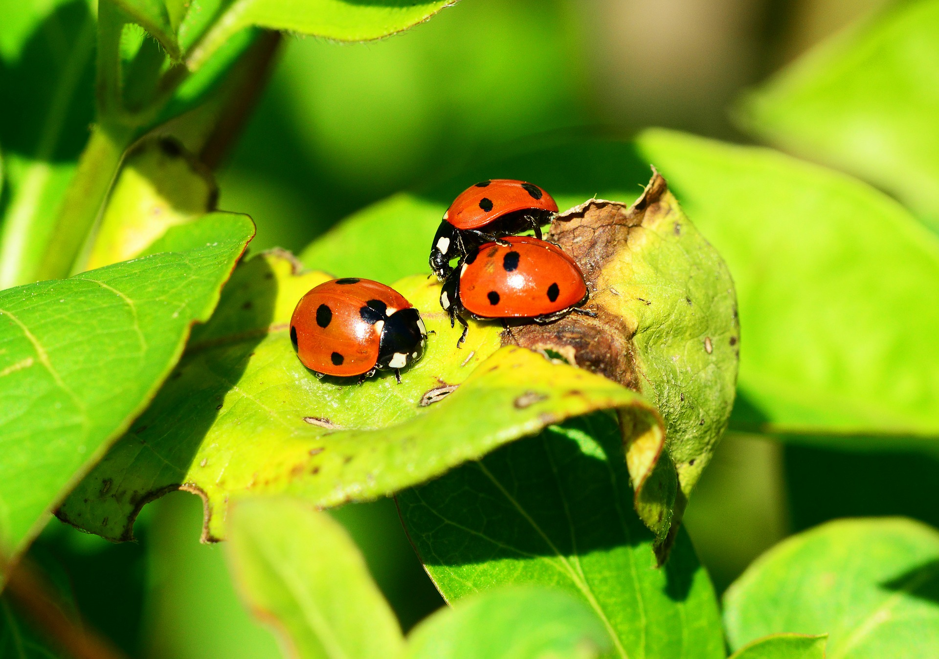 common fall pests in Massachusetts by Boz Pest Control
